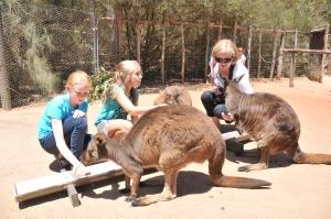 2013 01 14 Melbourne Zoo with Julia - Kangaroo feeding_0005